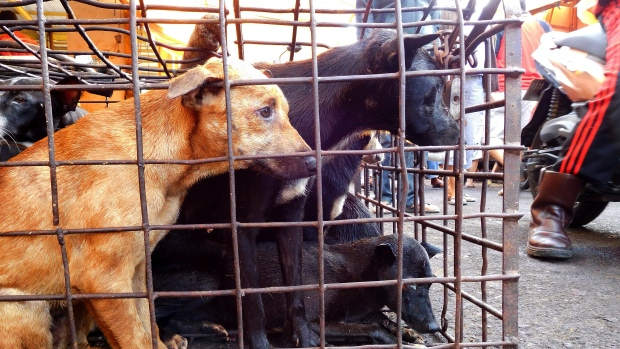 Dogs outside Tomohon market in Indonesia