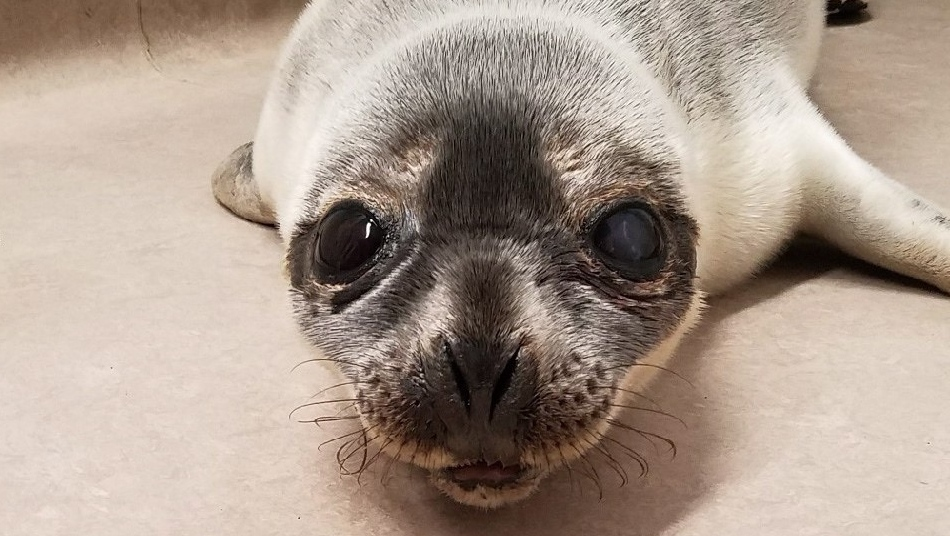 Seal hit by car