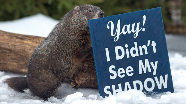Punxsutawney Phil, Wiarton Willie agree...six more it is!