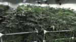 Marijuana company expanding