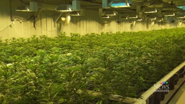 B.C. unveils legal marijuana rules