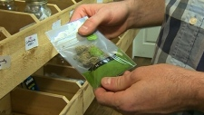 Province releases plan for recreational pot sales