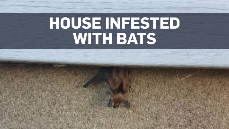 Bat-infested home to be completely rebuilt