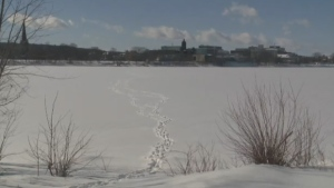 Close call along Saint John River has emergency officials warning about thin ice