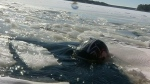 CTV Barrie: Ice rescue