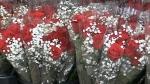 CTV Barrie: Flower industry