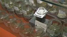 Calgarians, feedback, recreational cannabis survey