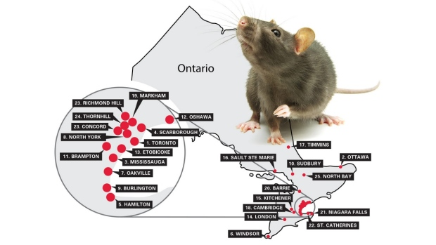 Rattiest Cities in Ontario