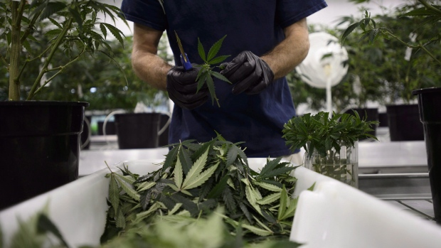 Mixed Reactions Over Canada's Legalization of Marijuana