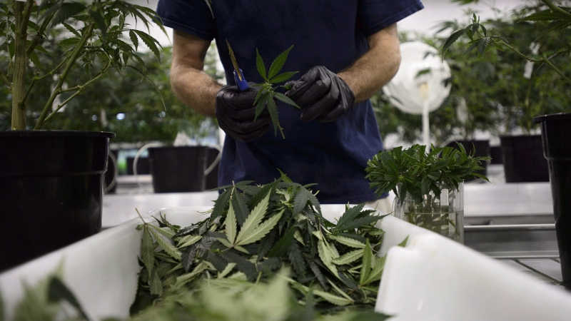 Workers produce medical marijuana at Canopy Growth Corporation's Tweed facility in Smiths Falls, Ont., on Monday, Feb. 12, 2018. (THE CANADIAN PRESS/Sean Kilpatrick)