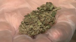 Calgarians look to cook with cannabis
