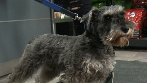 Pets may be allowed on OC Transpo