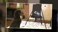 Creative Canine