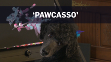 Painting poodle's artwork selling out