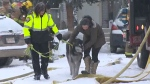 Dog's life saved after fire