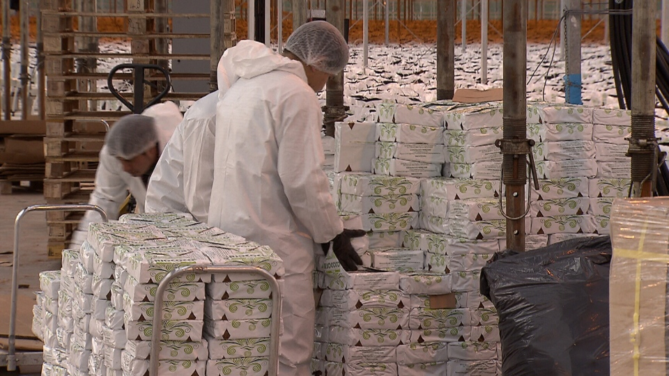 Workers unload supplies at BC Tweed's sprawling Langley, B.C. cannabis production facility on Feb. 17, 2018. (CTV Vancouver)
