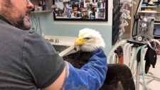 Vet rescues injured eagle