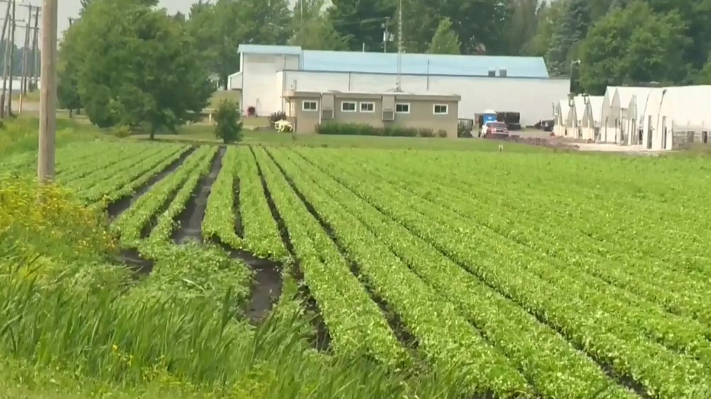 CTV Montreal: Pesticide restrictions
