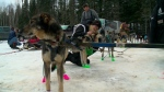 A history: Canadian Challenge Sled Dog Race