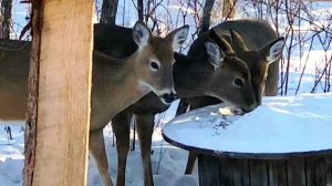 Buddies enjoying a morning snack. Photo by Susan Rieger.