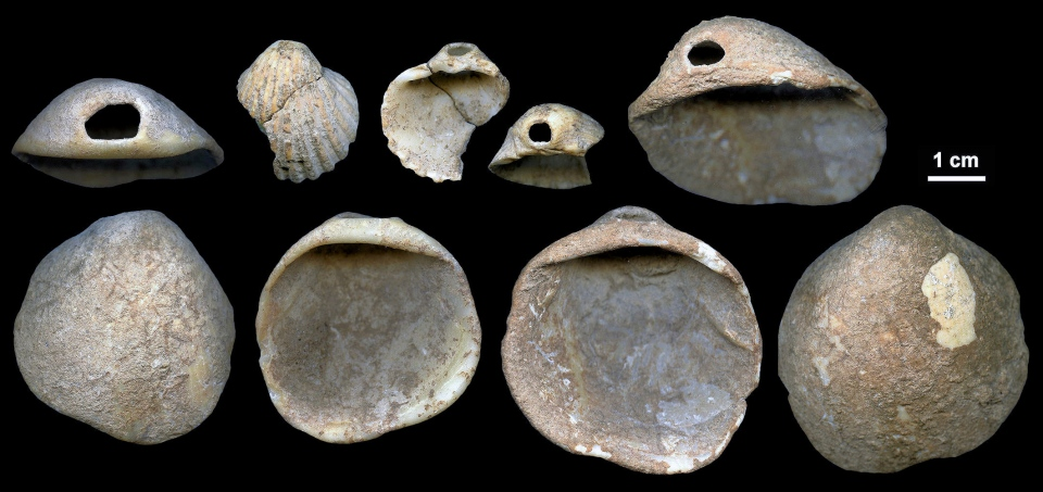 This undated image provided by Joaeo Zilhaeo in February 2018 shows perforated shells found in sediments in the Cueva de los Aviones near Cartagena, Spain. (Joaeo Zilhaeo)