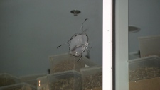 A shooting on Cambie Street near 48th Avenue left a bullet hole in the front of a business.