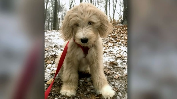 Family surrenders 4-month-old dog after vet said pup needed $8,000