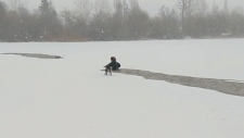 Dramatic dog rescue in icy Trout Lake