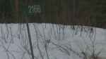 Gruesome homicide investigation near Burk's Falls