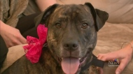 Dog owners want change to dangerous animal bylaw