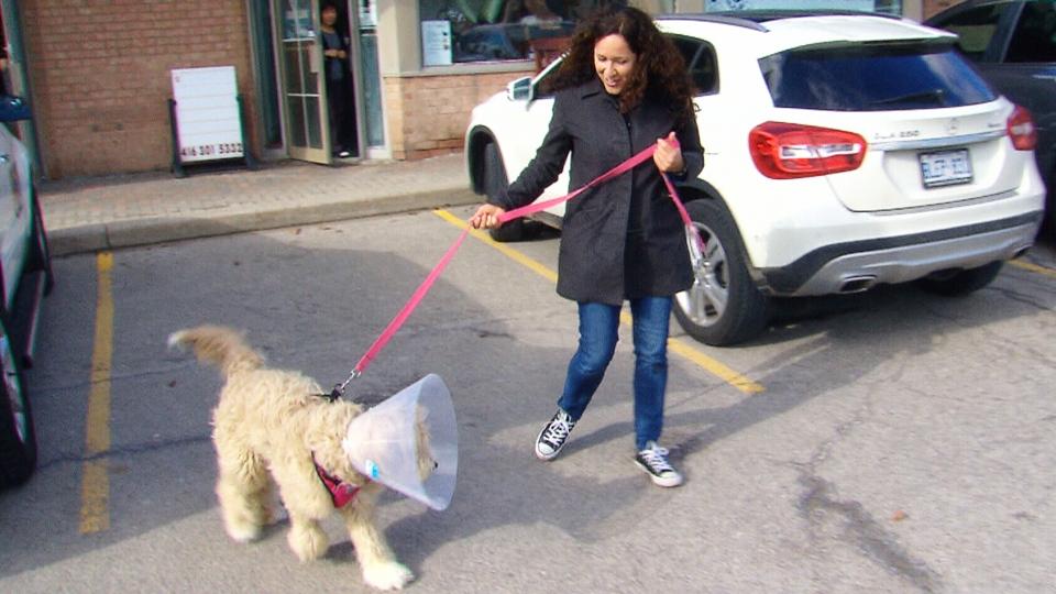 Natasha Goodman picks up Roxy the goldendoodle on Feb. 26, 2018. (CTV Toronto)