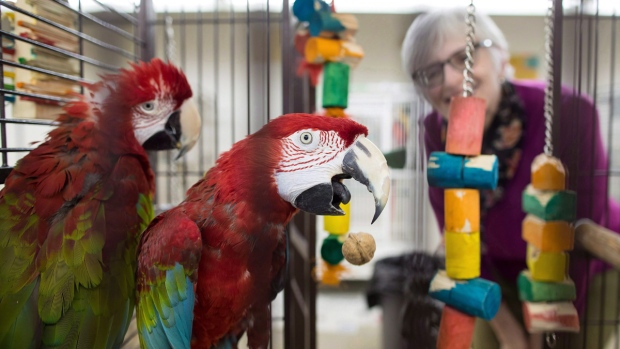 Green-wing macaws housed by Greyhaven sanctuary