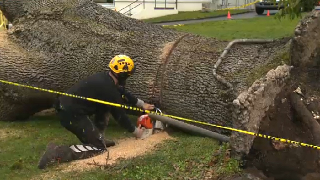 tree toppled