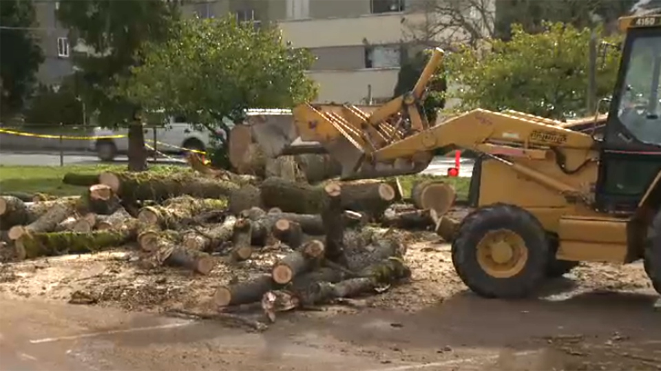 Strong gusts brought down a more than 200-year-old oak tree at a Victoria middle school Wednesday night. March 1, 2018. (CTV Vancouver Island)