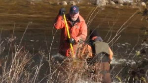 Nearly 11 days after he went missing, volunteers continue to search for three-year-old Kaden Young near Grand Valley, Ont. (CTV Kitchener)