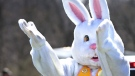 The Easter bunny throws eggs from the back of a truck. (AP Photo, The Winchester Star, Jeff Taylor)