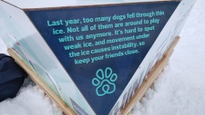dog ice safety