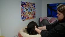 Sandi Lawson with Adopt Me Cat Rescue.