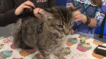 Pet of the Week: Rolo the kitty