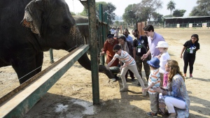 Prime Minister Justin Trudeau, wife Sophie Gregoire Trudeau, and children, Xavier, 10, Ella-Grace, 9, and Hadrien, 3, take turns feeding an elephant as they are given a tour of the elephant sanctuary in Mathura, India, on Sunday, Feb. 18, 2018. More than 125,000 people have signed a petition asking Canada to put a stop to the sale of all elephant ivory.THE CANADIAN PRESS/Sean Kilpatrick