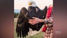High-tech backpacks for eagle research