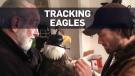 'Eagle backpacks' used to track birds