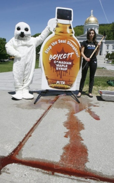 A People for the Ethical Treatment of Animals activist dressed as a baby seal during a protest at the Statehouse in Montpelier, Vt., Tuesday, May 26, 2009. (AP Photo/Toby Talbot)