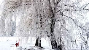 Beautiful frosted tree shot in Dominion City, MB. Photo by Ken Gregorchuk.