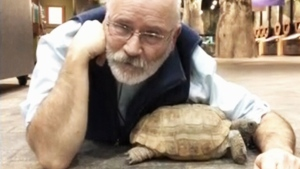 CTV News Channel: Celebrity tortoise