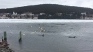 Dolphins are seen trapped in a harbour in Heart's Delight, N.L. in this undated handout photo. THE CANADIAN PRESS/HO, Whale Release and Strandings Group