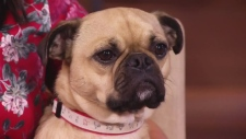 Dr. Adrian Walton on prepping your pet for spring
