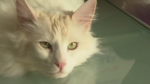 Bobby the cat
