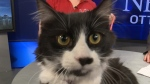 Pet of the Week: Baby the cat