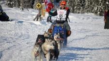 Maritimer completes Iditarod
